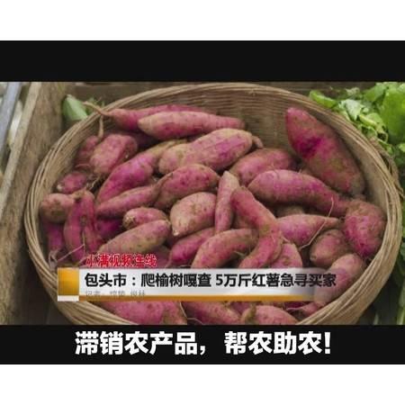 包头石拐区爬榆树嘎查合作社滞销红薯【助农扶贫产品】券后12.9元 5斤包邮