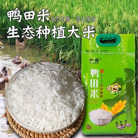 【领券立减13元】稻鸭共生生态鸭田米5kg 10斤  安徽六安特产不抛光不打蜡