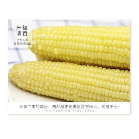 农家自产 玉米