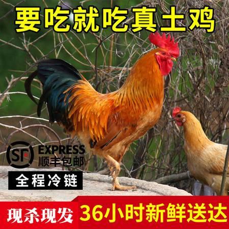 【木兰站点】散养鸡500天老母鸡土鸡农家散养走地山地放养笨整鸡野生态鸡 1.5KG