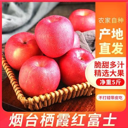 山东烟台栖霞红富士苹果 应季新鲜5斤冰糖心孕妇水果包邮