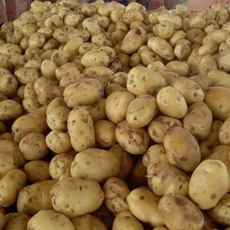 农家自产 土豆