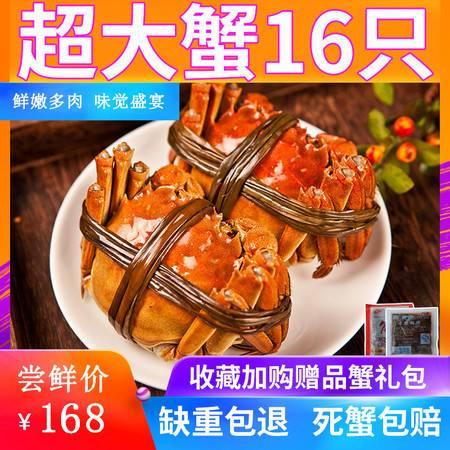 蟹阳坊 【抢16只】现货大闸蟹鲜活六月黄特大新鲜螃蟹全公母大闸蟹礼盒装