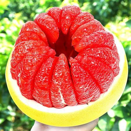 【48小时内发货】福建平和管溪红心柚子红肉蜜柚三红柚子新鲜水果当季整箱10斤密柚
