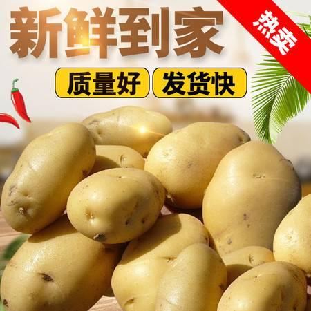 现挖大土豆5斤装单果150-250克新鲜黄心沙瓤马铃薯