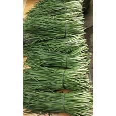 绿色有机蔬菜韭菜5/元一斤,10斤起50全国包邮