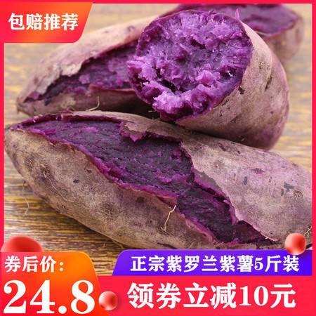 【领券立减10元】现挖紫罗兰小紫薯5斤装 新鲜沙地番薯农家自红薯紫蔬菜包邮预售