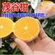 【领券立减5元】正宗广西茂谷柑薄皮5斤当季新鲜水果现摘蜜橘子精选大果包邮