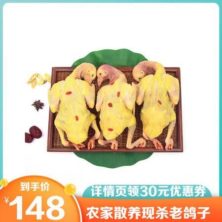 【顺丰包邮领券立减30元】鸽子 农家散养3年老鸽子3只装土鸽现杀现发新鲜鸽肉孕妇儿童滋补
