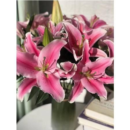 【七夕情人节】云南新鲜鲜花 花卉双头粉色百合10枝情人节礼物