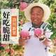 8.12号活动商品国宴苹果【领8元券下单】陕西洛川红富士脆甜苹果