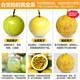 黄金百香果1斤试吃装( 拍3送2,合并发一箱5斤 ) 百香果鸡蛋果 新鲜水果