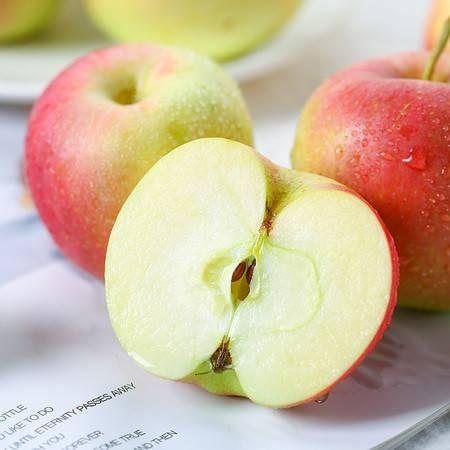 【山西 • 嘎啦苹果8.5斤】皮薄多汁 果肉厚实 淡酸浓甜 一口嘎嘣脆 汁水满口 新鲜现摘的苹果
