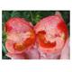 农家自产  西红柿2斤装