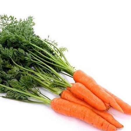 【衡水饶阳】农家自产 新鲜沙土地胡萝卜10斤装  包邮