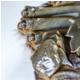太湖生态蟹 2019大闸蟹 公蟹3两*4只 母蟹2两*2只 礼盒装