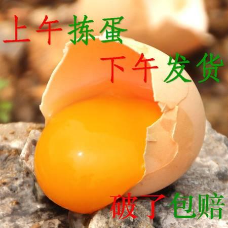 土鸡蛋 柴鸡蛋 草鸡蛋 新鲜鸡蛋 散养40/30/20/10个破了包赔