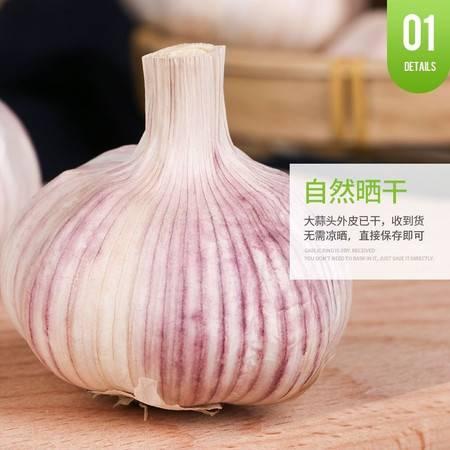 大蒜5斤干蒜大蒜头国庆节活动山东大蒜紫皮大蒜批发3斤10斤农家