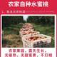 【现摘冬桃3-10斤】水蜜桃脆甜桃子 当季时令水果新鲜青州桃批发