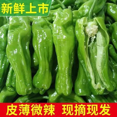 现摘薄皮青辣椒新鲜蔬菜皱皮青椒虎皮青椒微辣烧烤用2/3/5斤净重