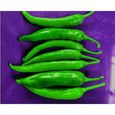 新鲜青椒5斤青椒 鲜辣椒新鲜蔬菜椒 现摘辣椒