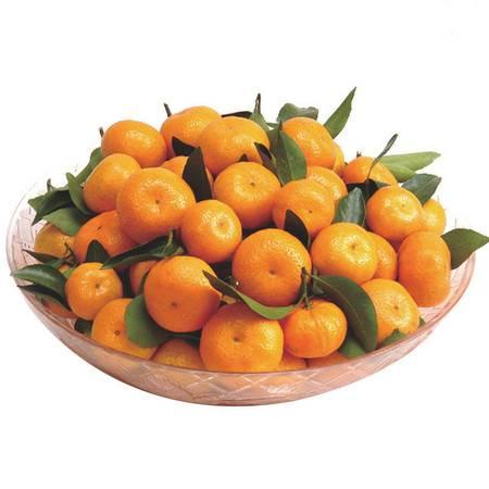 现摘南丰蜜桔5斤甜新鲜蜜橘孕妇水果桔子包邮江西蜜桔整箱年货
