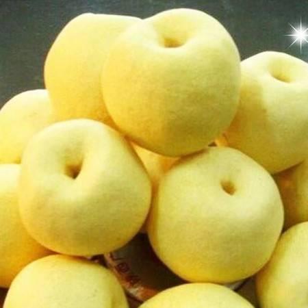 现摘砀山酥梨园的酥梨新鲜5斤当季水果酥梨整箱非皇冠梨香梨