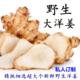 【洋姜5斤】洋姜现挖野生洋姜新鲜洋姜鬼子姜不辣5斤腌制菊芋