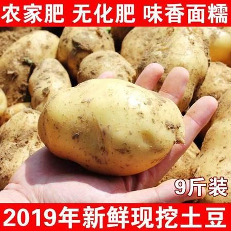 现挖现发山西新鲜黄皮大土豆非转基因蔬菜洋芋马铃薯红皮黄心土豆