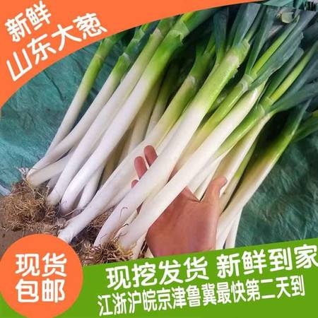 山东铁杆大葱安丘大葱香葱5斤新鲜去叶笨葱蘸酱长葱绿色蔬菜
