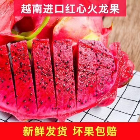 越南红心火龙果新鲜水果大果(单果300-450g) 新鲜直达富含花青素