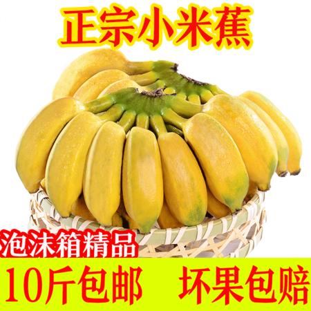泡沫箱精品果广西小米蕉新鲜水果应季水果孕妇芭香蕉5-10斤包邮