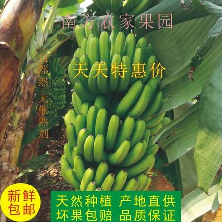 广西新鲜农家香蕉 新鲜水果 现采鲜蕉 新鲜包邮