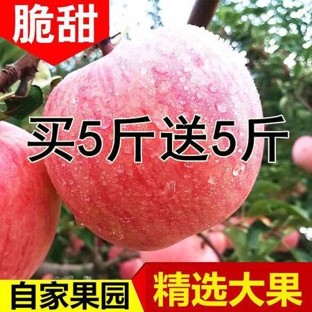 我们只销售正宗的红富士冰糖心-陕西冰糖心红富士苹果新鲜水果苹果10斤(果经70mm-90mm)包甜脆