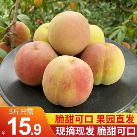现摘沂蒙山蜜桃新鲜桃子冬桃脆桃冬雪蜜桃小毛桃水果3/5/10斤包邮