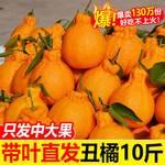 【现货速发 坏果包赔 5斤35.9】四川丑橘不知火丑八怪橘子新鲜孕妇水果当季桔子柑橘丑柑丑桔批发