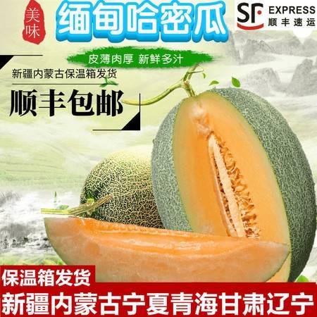 【顺丰包邮】缅甸新鲜哈密瓜网纹瓜西州蜜甜香瓜水果多规格可选