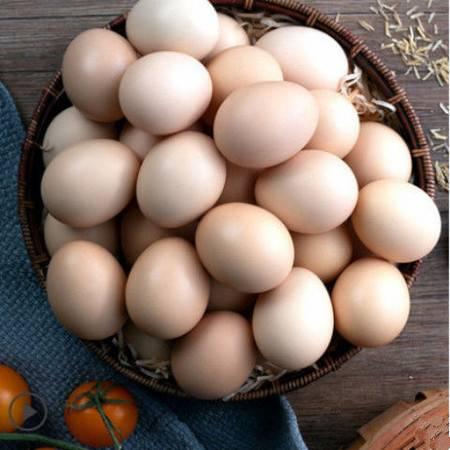 【 农家土鸡蛋】 正宗散养土鸡蛋农村农家正宗笨鸡蛋10/40枚新鲜初生鸡蛋批发整箱多规格