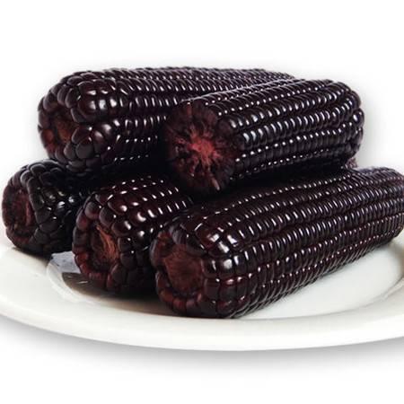 【一等黑糯】19年黑龙江黑糯玉米棒新鲜甜玉米真空包装紫东北玉米