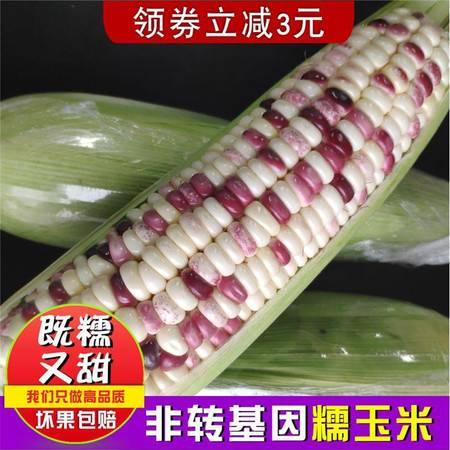 山东现摘现发甜糯玉米棒苞米苞谷黏粘玉米棒3斤5斤新鲜花粒糯玉米