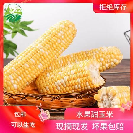 【10斤带箱】现摘新鲜云南甜玉米玉米棒甜脆水果玉米包谷新鲜蔬菜包邮
