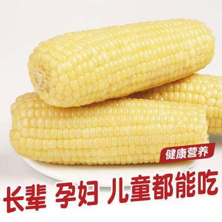 穗康玉米新鲜糯玉米 新鲜现摘甜玉米粘玉米棒糯玉米230克白糯5支