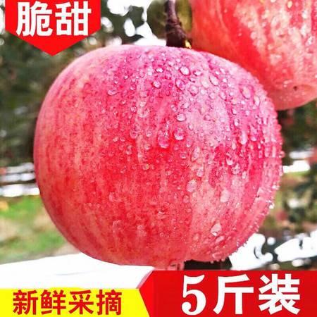 山东烟台栖霞红富士当季现摘脆甜苹果5斤水果大果批发包邮