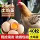 【40枚高山鸡蛋】大别山新鲜鸡蛋粮食喂养 高山土鸡蛋初生蛋月子柴鸡笨鸡蛋