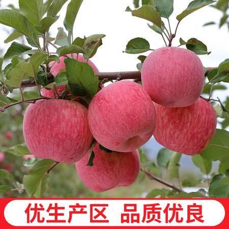 【耕基】 陕西新鲜水果 延安早熟红富士苹果24枚带箱80-85mm6kg