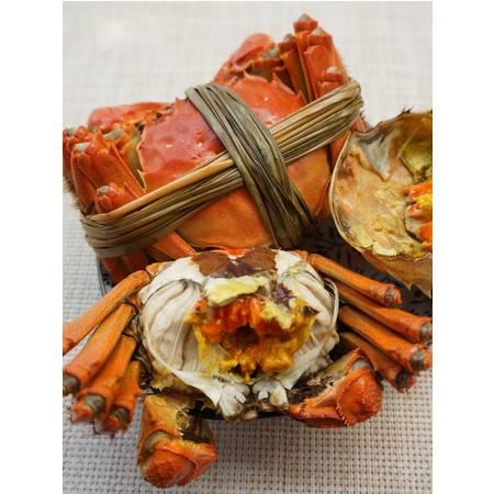 安東米富 大闸蟹4.5两公配3.5两母 10只装鲜活螃蟹团购
