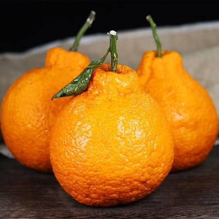 笑农 不知火丑橘9斤