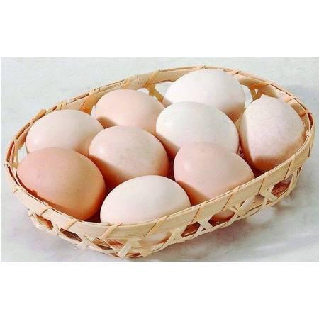【消费扶贫】安徽濉溪 临涣镇 无公害鲜鸡蛋40枚(限展会自提)