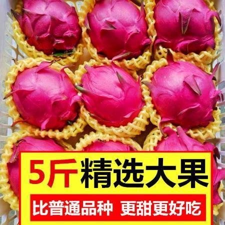 【正常发货】当季现摘红心火龙果新鲜水果现摘包邮5斤2斤单果300-600g