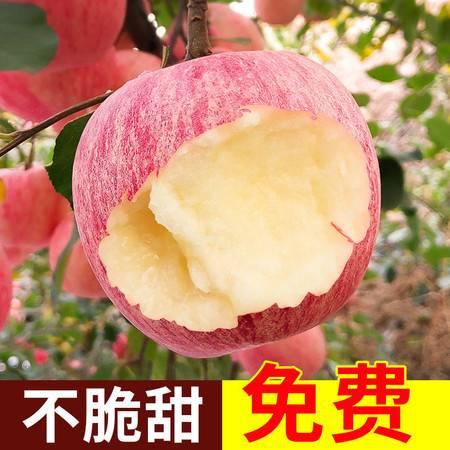烟台红富士苹果山东新鲜水果整箱批发3斤/5斤/10斤脆甜冰糖心丑果